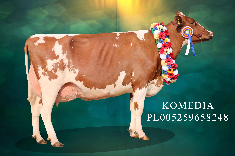 Komedia-Super Champion